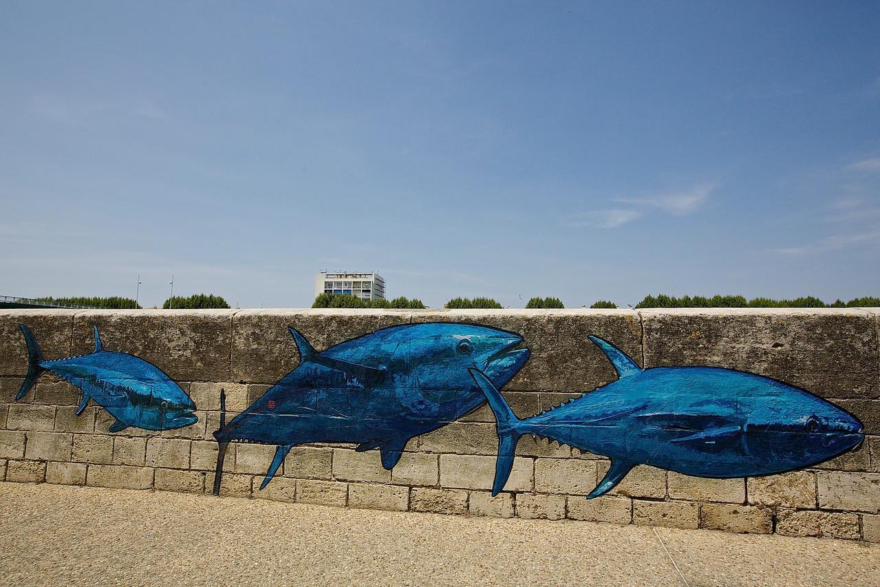 Blue Tuna.  Arles.