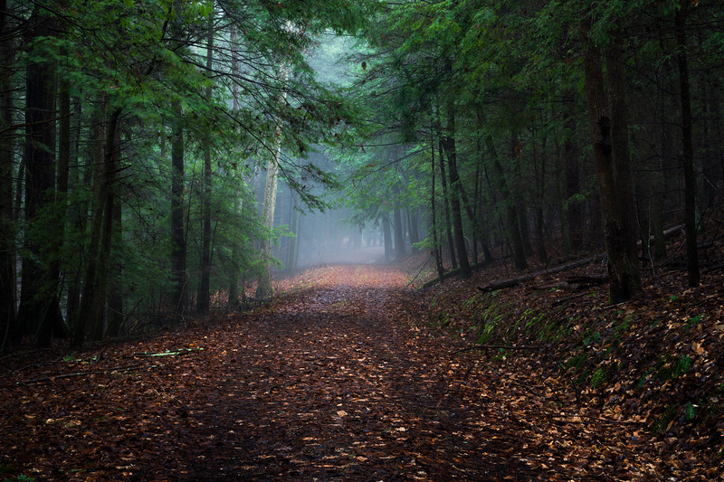 A path in the fog at Hocking hills