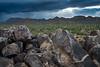 Saguaro-0294