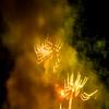 2016_UAA_Fireworks_53