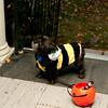 Lansdowne_Halloween2011_001