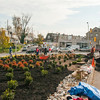 Planting the Traffic Island