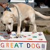 dog_day_2010_075