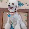 dog_day_2010_011