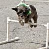 dog_day_2010_048