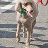 dog_day_2010_056