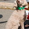 dog_day_2010_059