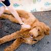 dog_day_2010_032