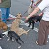 dog_day_2010_002