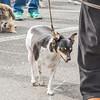 15_09_26_DogDay_413