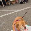 16_09_24_Dog_Day_18