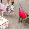 16_09_24_Dog_Day_48
