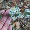 Tiny Beauties by R  Dixon