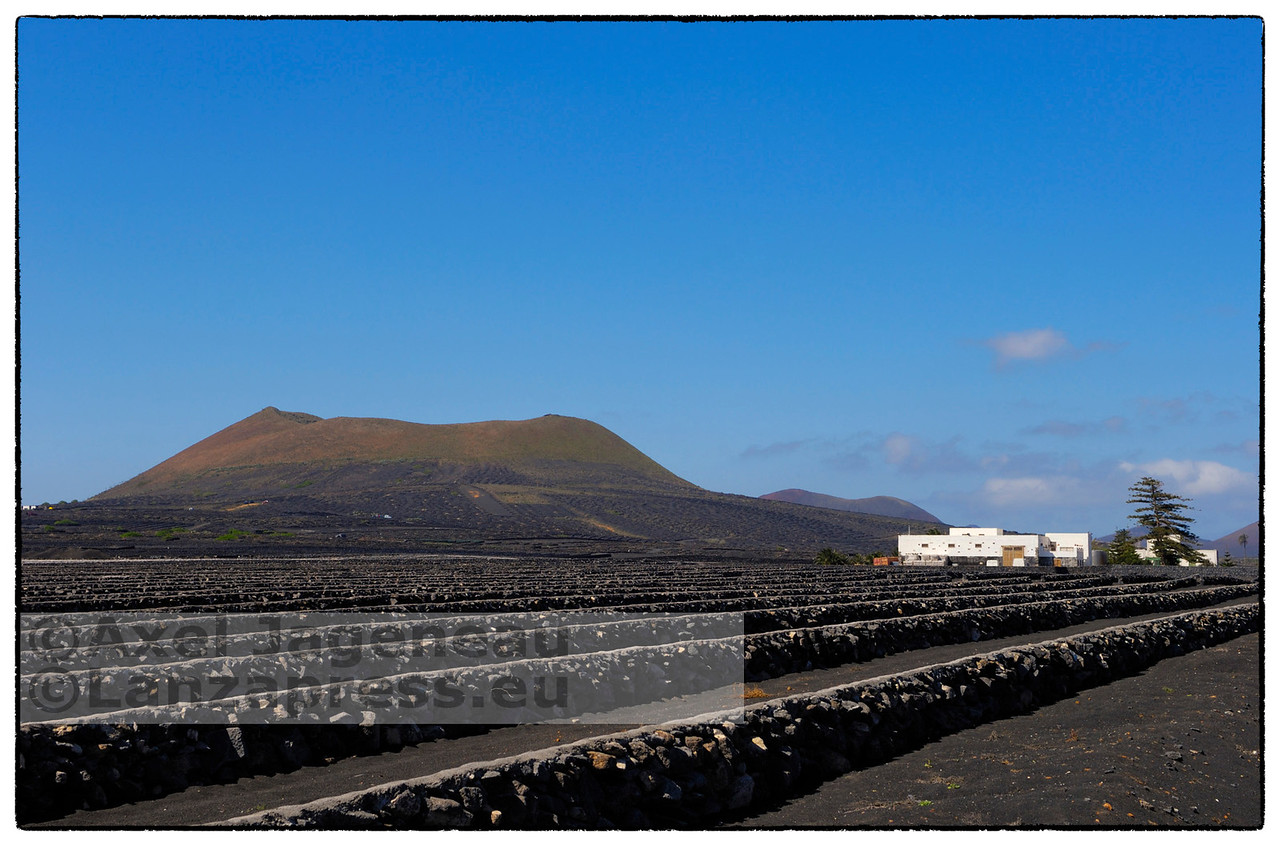 La Geria - Vino de Lanzarote