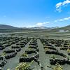 Lanzarote - Wine region La Geria mit Feuerbergen