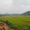 Rice fields outside Nong Khiaw