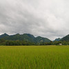 Rice fields around Nong Khiaw