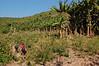 Trekking past wild banana tree forest