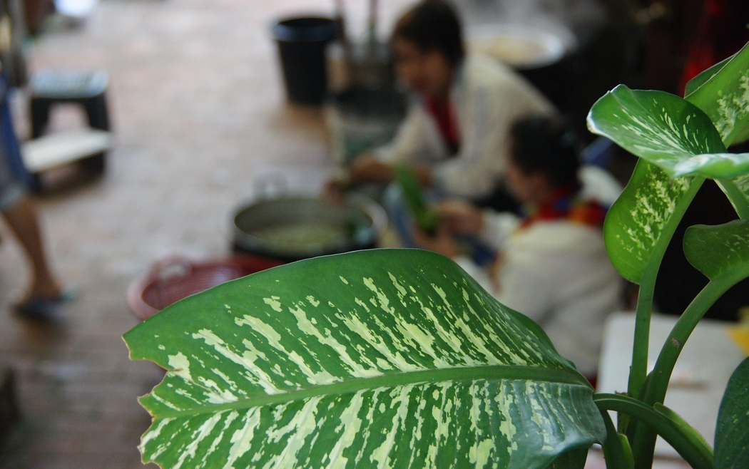 A picture of a leaf with Laos vendors in the background preparing vegetables - Luang Prabang, Laos.  Travel photo from Luang Prabang, Laos.