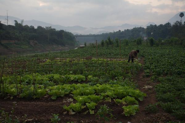 "snapshots (""trip pics"") from Laos"
