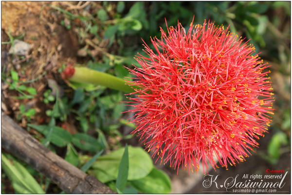 It reminds me of rambutan