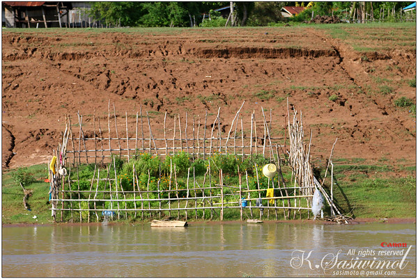 A mini garden along the Mekong River