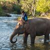 Mahout rides elephant in Xe Set river, Tad Lo (Tat Lo),  Laos
