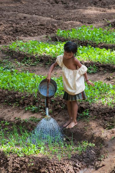 Young girl waters vegetable beds, Salavan, Laos