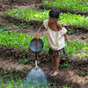 Young girl waters vegetable beds, Salavan, Laos
