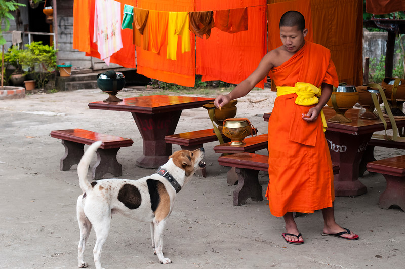 Buddhist monk with monastery dog, Luang Prabang, Laos.