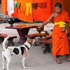 Buddhist monk with monastery dog, Luang Prabang, Laos.