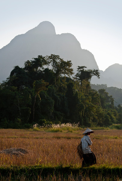 Rice field and Karst mountains, Vang Vieng area, Laos.