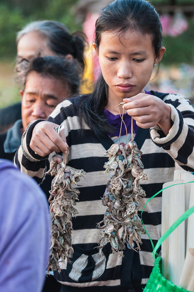 Choosing frogs at morning market, Don Khong Island, Laos