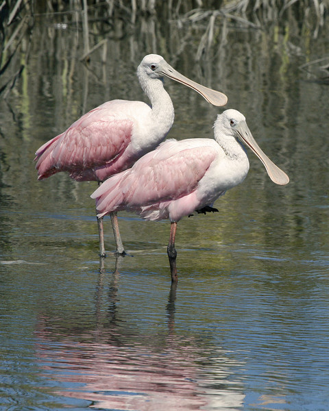 Two Pink Ones