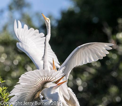 St Augustine Florida Birds - Alligator Farm