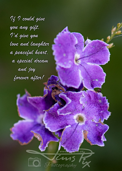 _19Z1777 purple flower with if I could.jpg
