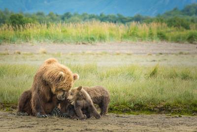 Bear Family 3
