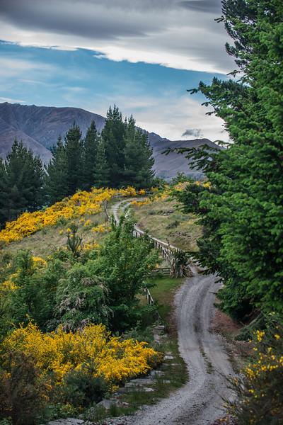 Road to Wanaka,NZ