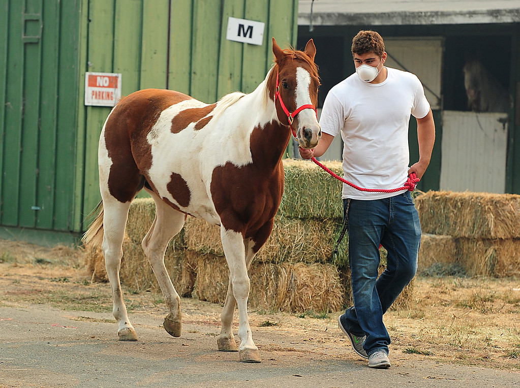 . VALLEJO, CA- OCT. 11, American Canyon football player, Lucas Gramlick, walks a horse as he helps out at the large animal evacuation center at the Solano County Fairgrounds on Wednesday. (Chris Riley/Vallejo Times-Herald)