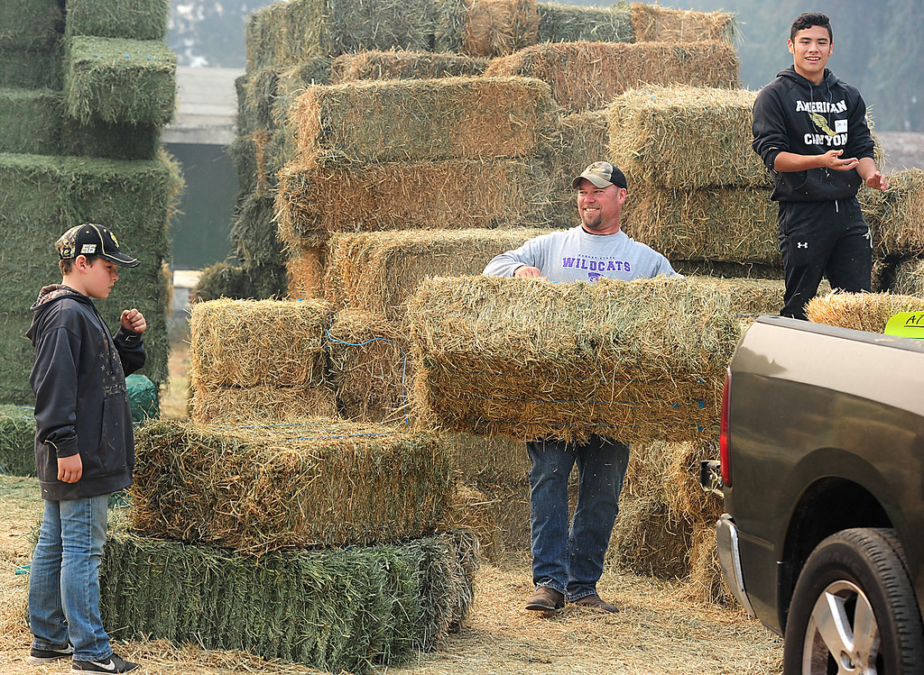 . VALLEJO, CA- OCT. 11, American Canyon head football coach Larry Singer carries a bale of hay as he helps members of the American Canyon football team volunteer at the large animal evacuation center in Vallejo on Wednesday. (Chris Riley/Vallejo Times-Herald)