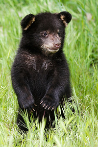 Black bear cub. Photo by Lynn Chamberlain