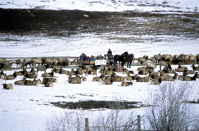 Enjoy a wagon ride through the elk feeding grounds at Utah's Hardware Ranch.