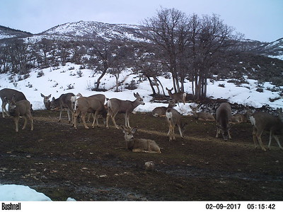 Deer feeding station in northern Utah