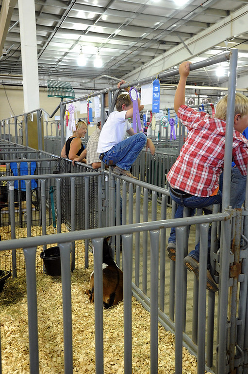 . Tate Shearer, 11, center, and his family hang around after showing their goats at Larimer County Fair Wednesday, August 2, 2017. This is the Shearers\' second year showing at the fair. (Michelle Risinger/ Loveland Reporter-Herald)