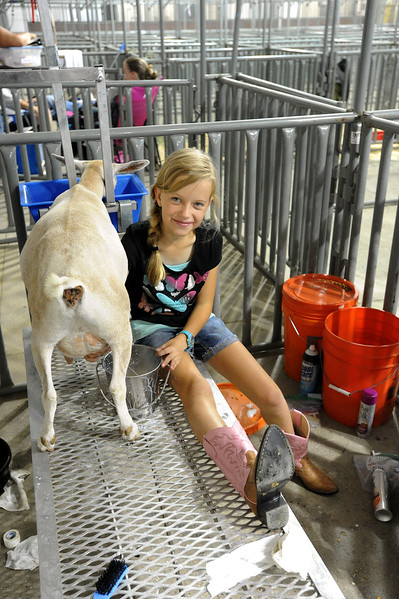 Samantha McClain, 11, milks her goat, Ivy, Wednesday, August, 2, 2017 after showing in the Larimer County Fair in Loveland. (Michelle Risinger/ Loveland Reporter-Herald)