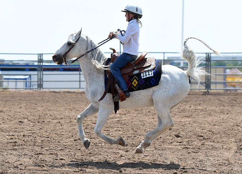 Jessica McCray of Loveland, 8, races back to the gate on her 18 year-old Welsh pony, Tex, Wednesday, Aug. 2, 2017, during the Poled Key Hole portion of the Gymkhana competition at the Larimer County Fair in Loveland.   (Photo by Jenny Sparks/Loveland Reporter-Herald)