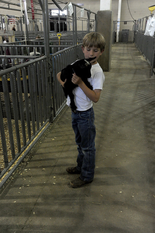 . Tate Shearer carries his kid, Adelaide, back to her pin Wednesday, August 2, 2017 after showing his goats at the Larimer County Fair in Loveland. (Michelle Risinger/ Loveland Reporter-Herald)
