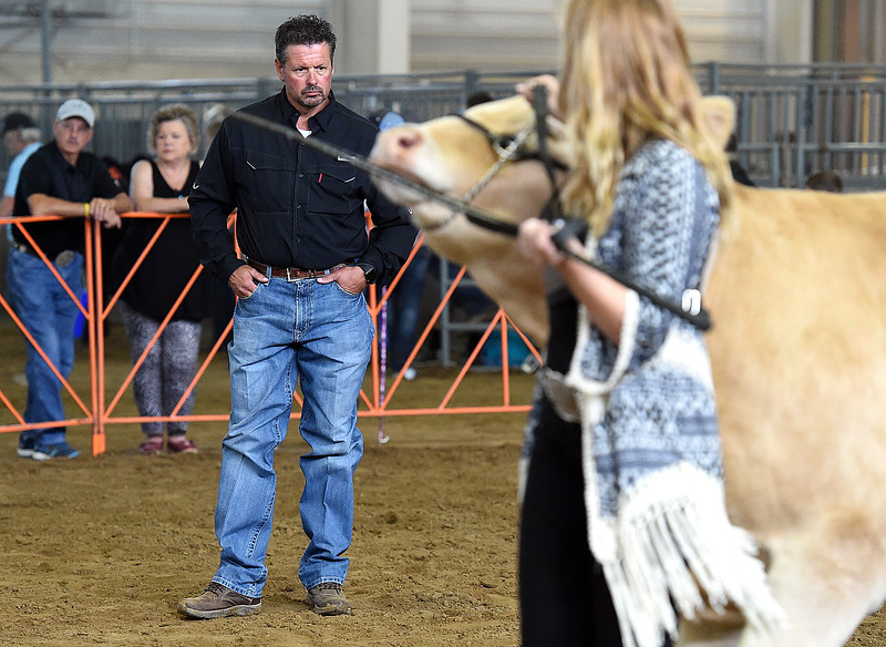 Judge Jeff Sargent takes a good look at steers as they are lead around the ring Monday, Aug. 6, 2018, during the market beef competition during the Larimer County Fair at The Ranch in Loveland.  (Photo by Jenny Sparks/Loveland Reporter-Herald)