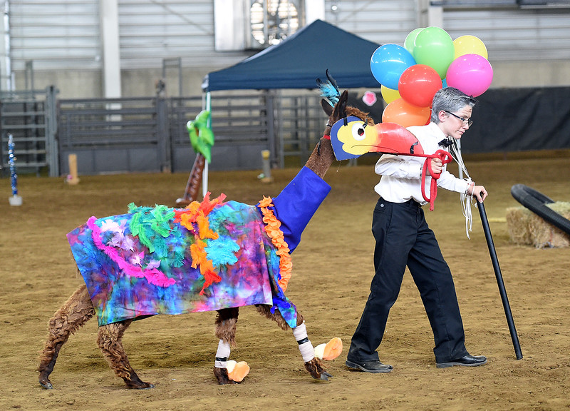 "Noah Juhl of Wellington, 13, and his alpaca, Deuce, are dressed as characters from the movie ""Up"" for the alpaca costume contest Thursday, Aug. 2, 2018, during the Larimer County Fair at The Ranch in Loveland.   (Photo by Jenny Sparks/Loveland Reporter-Herald)"