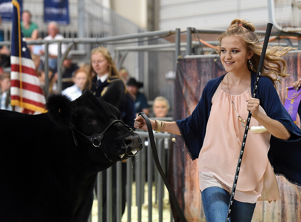 . Julia Frye, 17, shows her Grand Champion market beef steer, Ten, on Wednesday, Aug. 8, 2018, during the Fair Sale at the Larimer County Fair at The Ranch in Loveland.  (Photo by Jenny Sparks/Loveland Reporter-Herald)